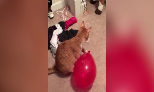 Kitty vs Balloon