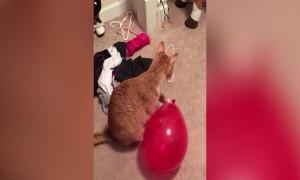Kitty vs Balloon
