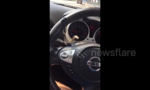 ''Get out of my car!'' Thai driver panics after finding tiny lizard on steering wheel