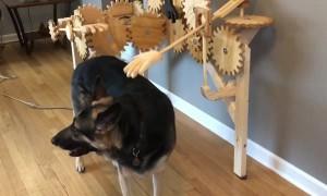 Automatic Dog Petter