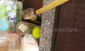 Kitchen nightmare! Rescuers battle with 17ft long king cobra caught under sink