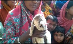 Villagers take selfies and pray with this one-eyed goat in north India