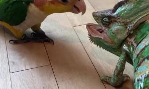 Bird Unsure of New Chameleon Friend