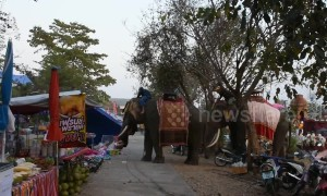 Chaos as festival elephant picks up teenage girl and goes on rampage