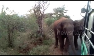 Panic on bus as elephant herd comes face-to-face with passengers in southern India