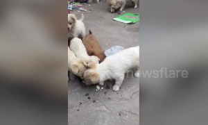 Caring stray puppy brings back some food to its mum