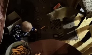 Cat Helps a Kid Collect Carrots