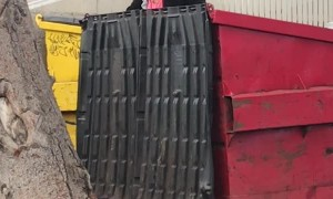 Woman in Dumpster Screams at Nobody