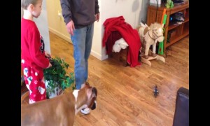 Dog vs Toy Helicopter – Who Will WIn?