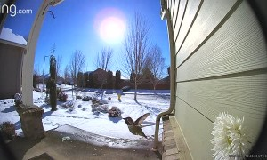 Hummingbird Hello Caught on Doorbell Camera