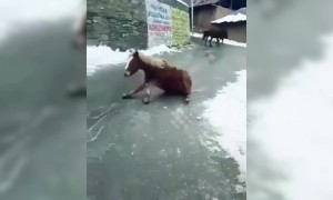 Donkeys slip on icy road in Kashmir town following snow storm