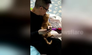 Needy cat paws owner to ask for a kiss