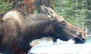 Moose Family Car Wash