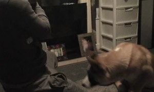 Cat Freaks Out at Sight of Dog