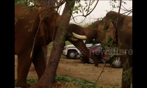 Wild and captive elephants baffle forest officials with their unlikely friendship