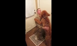This golden-doodle didn't know how to react when his dad came home from Afghanistan