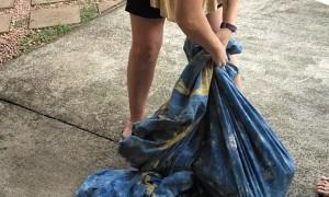 90 Pound Python Found in Laundry Room