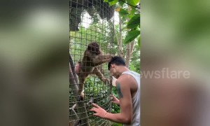 Helpful monkey tries to groom tourist's hair at wildlife park in China