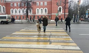 Dog's Strange Way of Walking