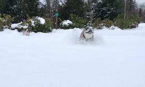 A Pair of Powder Pups