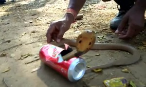 Furious cobra rescued from beer can in east India