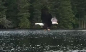 Eagle Works Smarter Not Harder