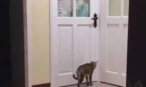 Crafty Cat Can Open the Door