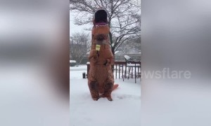US woman in T-Rex costume mocks weather report