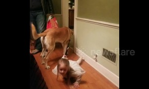 Dog walking the human? Family dog drags three year old trying to pull leash