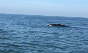 Fishing Trip Turns into Whale Watching Close Encounter
