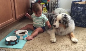 Baby adorably hand feeds dog food to Australian Shepherd