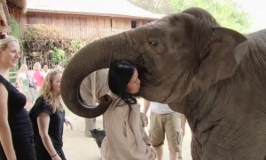 Elephant shows deep affection towards human friend