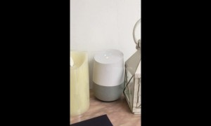 Google Home Device Gives Bizarre Answer To Animal Question