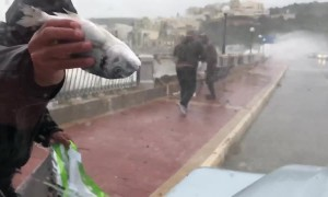 It's raining fish! Men brave raging storm on Malta to pick up fish blown ashore