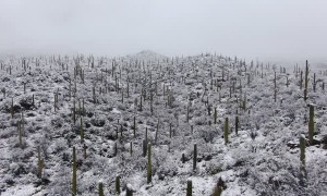 Breathtaking Footage of Snowfall in the Desert