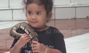 4-year-old girl seen handling live pythons at reptile show in Indonesia