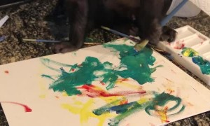 Monkey Paints a Picture