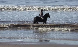 Horse cools off in sea during UK's February heatwave
