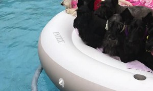 Eight Pups in the Pool