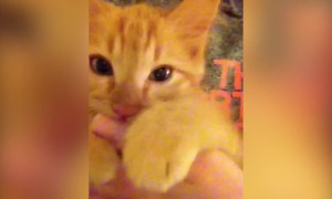 Kitten thinks her Human is her Mama