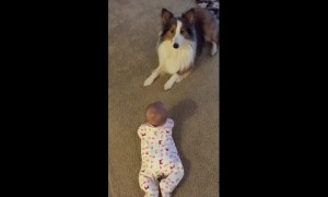 Genius dog adorably teaches baby how to roll over