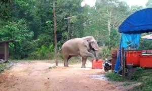 Brazen elephant steals tourists' lunch in Thai camp