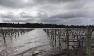 Vineyards submerged in Wine County as area floods