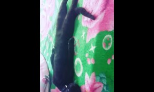 Cat Snoozes Sprawled Out