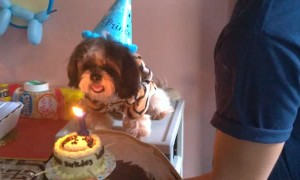 Dog Blows Out Birthday Candle on Cake