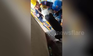 Incredible moment stranded dog is rescued from 165ft high concrete motorway pillar in Bangkok