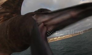 Terrifying moment seabird dive-bombs tourist