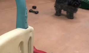 Home Time Delight at Doggy Day Care