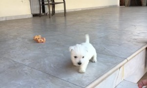 Brave puppy conquers stairs for the very first time