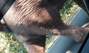 Husband and wife recoil in fear as wild elephant approaches their car